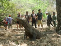 Komodo Pulau Rinca