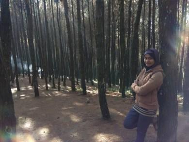 Hutan Pinus Puncak Bintang